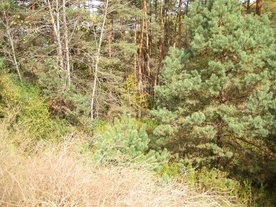 New Albany Residential Lots & Land For Sale: Front Street Rt 220
