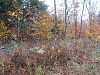Dushore Residential Lots & Land For Sale: Lot 12 Rocky Road