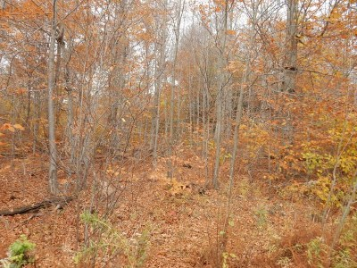 Dushore Residential Lots & Land For Sale: Lot 13 Rocky Road