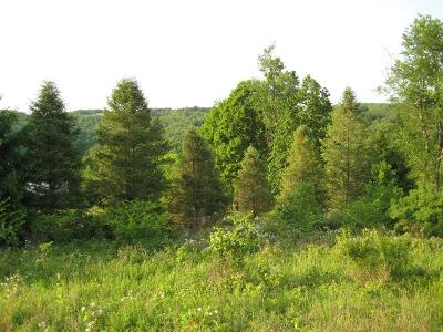Dushore Residential Lots & Land For Sale: Turkey Lane