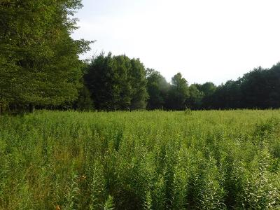 Dushore Residential Lots & Land For Sale: 35.5 Acr S. Lick Creek Road