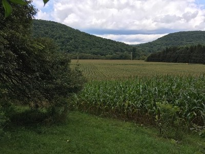 Shinglehouse Residential Lots & Land For Sale: Rt 44 N.