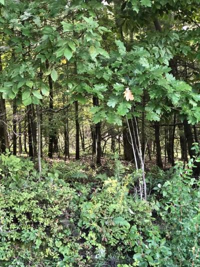 Millville PA Residential Lots & Land For Sale: $78,000