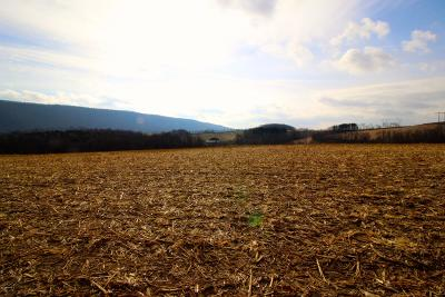 Bloomsburg Residential Lots & Land For Sale: Houck Hollow Road
