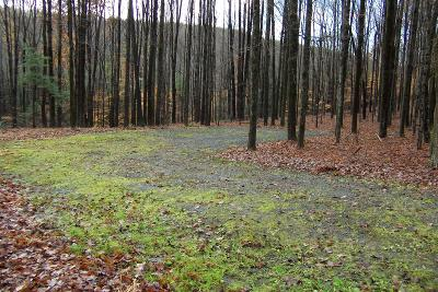 Susquehanna County Residential Lots & Land For Sale: O Snyder Road