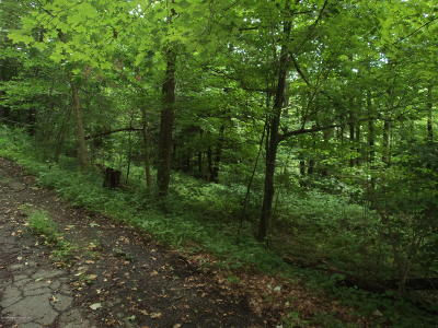 Susquehanna County Residential Lots & Land For Sale: Depot Street