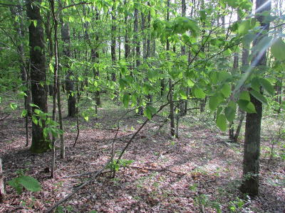Susquehanna County Residential Lots & Land For Sale: Irish Hill Road