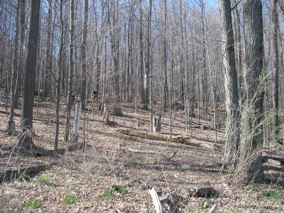 Susquehanna County Residential Lots & Land For Sale: Lake Avenue