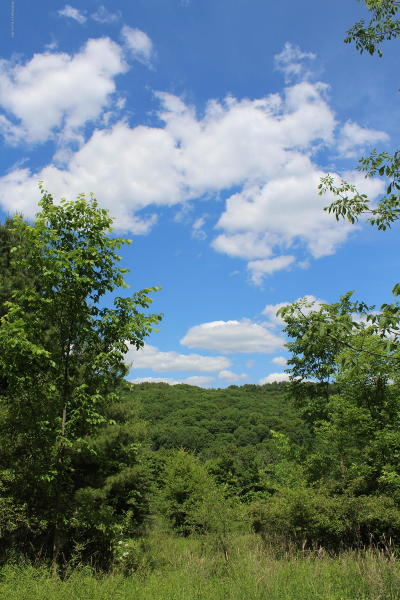 Tunkhannock Residential Lots & Land For Sale: 5090 W Nicholson Rd