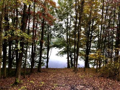 Susquehanna County Residential Lots & Land For Sale: Sr 2067 Lake Idlewild