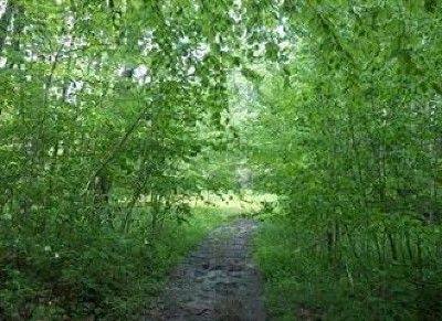 Mt. Jewett PA Residential Lots & Land For Sale: $25,000