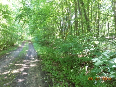Potter County, McKean County Residential Lots & Land For Sale: Bean Road