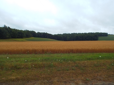 Potter County Residential Lots & Land For Sale: Sky Top Road