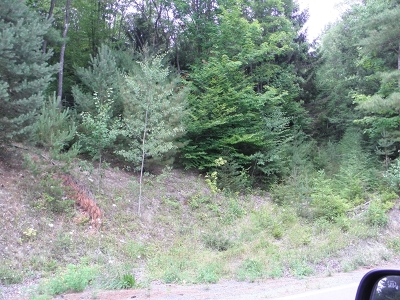Potter County Residential Lots & Land For Sale: Germania Road