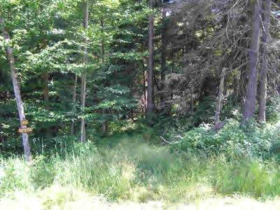 Wellsboro Residential Lots & Land For Sale: Lot 15 Hunter's Ridge Road