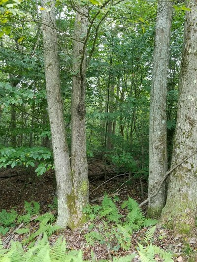 Galeton Residential Lots & Land For Sale: Butternut Road