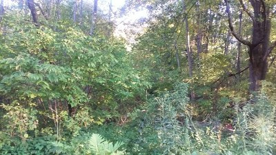 Potter County Residential Lots & Land For Sale: Lot #39 Pine Street
