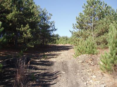 Covington Residential Lots & Land For Sale: Welch Mountain & White Tail Crossing