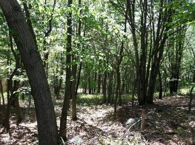 Blakeslee Residential Lots & Land For Sale: Lot 41/6 Woodland Pl