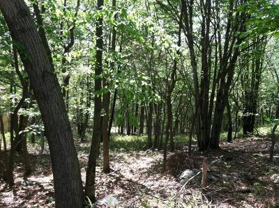 Blakeslee Residential Lots & Land For Sale: Lot 41/6 Woodland Pl