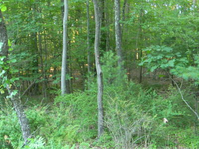 Monroe County Residential Lots & Land For Sale: Lr 45026 4