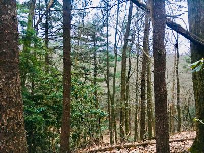 Tannersville Residential Lots & Land For Sale: #102 Cobble Creek Dr