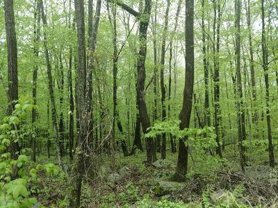 East Stroudsburg Residential Lots & Land For Sale: Lot 36 Pocono Forested Dr