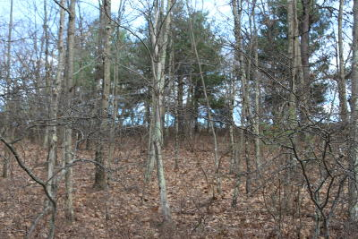 Bushkill Residential Lots & Land For Sale: Lot 31 Section 5a