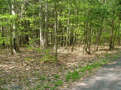 Monroe County Residential Lots & Land For Sale: Blackberry Road