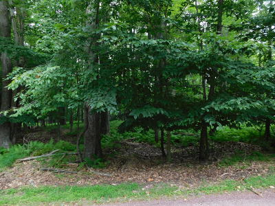 Pocono Lake Residential Lots & Land For Sale: 514 Ridge Rd