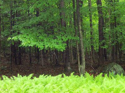 Paupackan Lake Estates Residential Lots & Land For Sale: 590 Chipmunk Trl