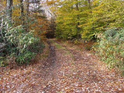 Greentown Residential Lots & Land For Sale: Beaver Dam Rd