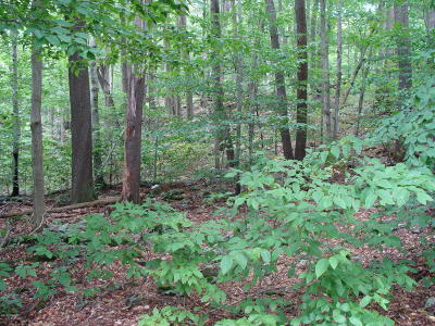 Gouldsboro PA Residential Lots & Land For Sale: $10,000