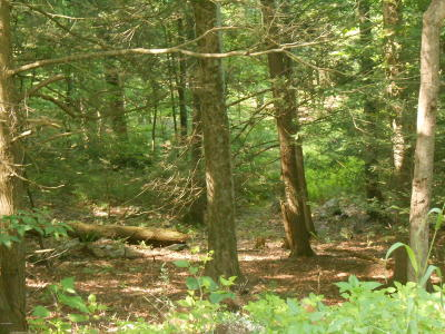 Canadensis Residential Lots & Land For Sale: 52 Logger Rd