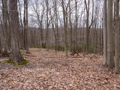 Greentown Residential Lots & Land For Sale: 337 Butternut Ln