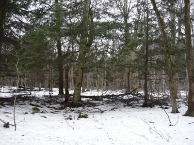 Gouldsboro Residential Lots & Land For Sale: 65 (55) Diamond Dr