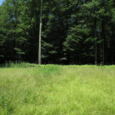 Pike County Residential Lots & Land For Sale: Route 390