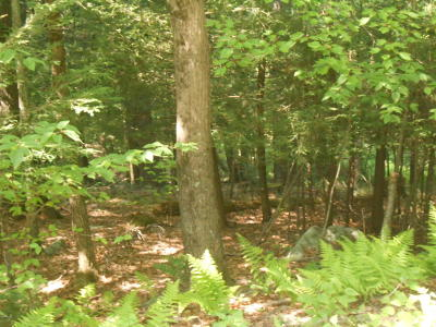 Newfoundland PA Residential Lots & Land For Sale: $25,000