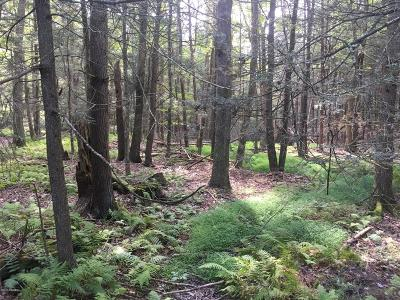 Paupack Residential Lots & Land For Sale: Lot 73 Water Mill Rd