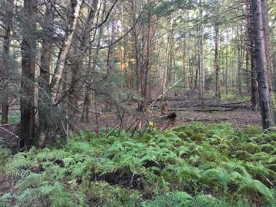 Paupack Residential Lots & Land For Sale: Watermill Rd