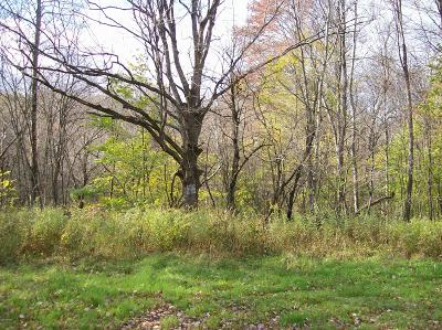 Honesdale Residential Lots & Land For Sale: Lot #3 Bunting Rd