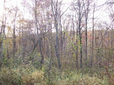 Honesdale Residential Lots & Land For Sale: Lot #4 Bunting Rd