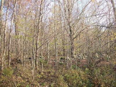 Honesdale Residential Lots & Land For Sale: Lot #8 Bunting Rd