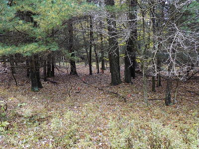 Residential Lots & Land For Sale: Lot 91 Arrowhead Dr