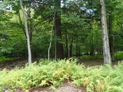 Newfoundland Residential Lots & Land For Sale: Apollo Dr
