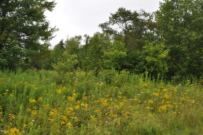 Pleasant Mount Residential Lots & Land For Sale: Daw Rd
