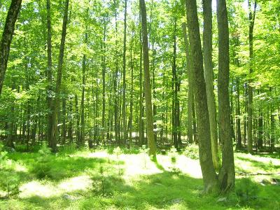 Ruffed Grouse Residential Lots & Land For Sale: Lot 17-C S Wynd Dr
