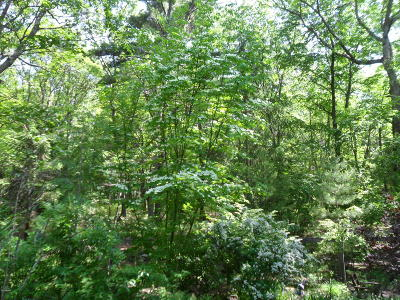 Milford Residential Lots & Land For Sale: Lot811/S-2 Lenape Dr