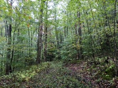 Somerset/Cambria County Residential Lots & Land For Sale: School House Road