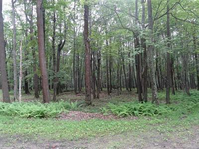 Somerset/Cambria County Residential Lots & Land Contingent: 43a Blueberry Way